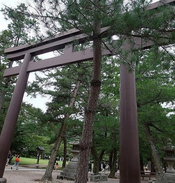 出雲大社(IZUMO-OYASHIRO)・松並木の参道の鳥居(SAN-NO-TORI)